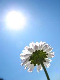kwiatek miłości