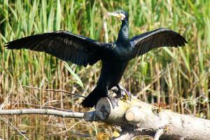 Wycieczka dla Singli - Rezerwat Kormorana Czarnego w Kątach Rybackich