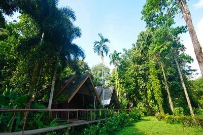 Park narodowy - poznaj pradawną siłę dżungli