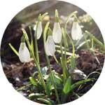 singlowa wiosna w górach
